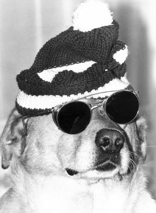Dog wearing a woolly hat and dark glasses, October 1979.