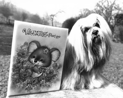 Dog with Valentine's card, February 1984.