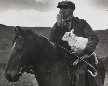 Tom Jones on horseback carrying a lamb as he whistles orders to his dogs, by Edward Malindine.