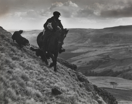 Tom Jones on horseback with a lamb, still searching the mountainside, by Edward Malindine.