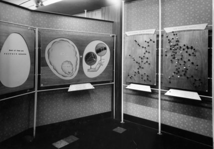 Festival of Britain, Science Exhibition, The Problem Of Life, 1951