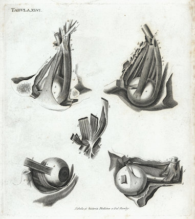 Anatomical treatise, by Jean-Baptiste Marc Bourgery.