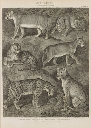 Full page illustrations of wild cats: Cougouar; Lynx; Ounce; Persian Lynx; Jaguar; Hunting Leopard.