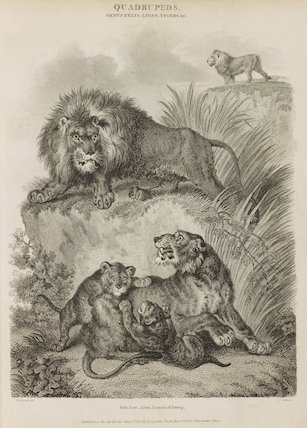 Full page illustration of a lion, lioness and young.