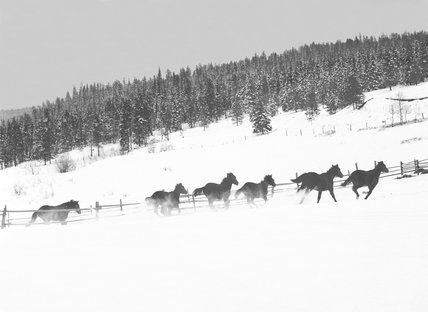 Race horses enjoying the snow