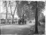 Elephants on Pulteney Road! c.1909