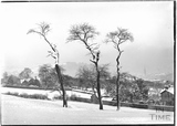 Three trees in Bathwick, viewed from North Road c.1920s