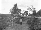 The photographer's wife and twin boys and a fallen down tree c.1920s