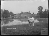 Badminton House with a cow in foreground, Wiltshire c.1935