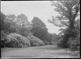 Rhododendrons at Longleat Park c. May 1938