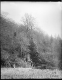 Thought to be Stourhead, Stourton, Wiltshire April 22nd 1900