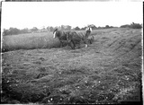 A horse-drawn plough, Leigh on Mendip, Somerset 28 June 1935