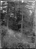 Woodland path, Alford, near Castle Carey, Somerset, c.1930s