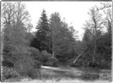 Woodland scene, Alford, near Castle Carey, Somerset, c.1930s