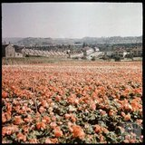 Dufaycolor view over the Blackmore & Langdon Nurseries towards Oldfield Park, May 1937