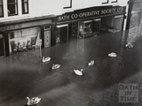Swans swimming in Southgate Street, Bath 1960