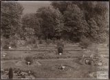 General view of Annie's Arboretum in the grounds of Eagle House, Batheaston, c.1910
