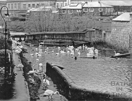 Swans on the Kennet and Avon Canal, Widcombe, Bath c.1960