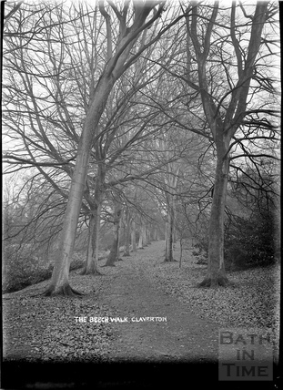 The Beech Walk in autumn, Claverton Manor, c.1930s