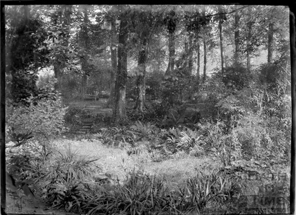Woodland with bench in the grounds of Widcombe Manor c.1920s