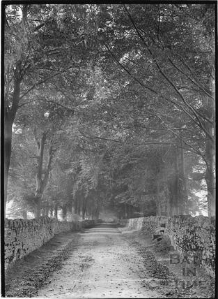 The Avenue, Claverton Down c.1910