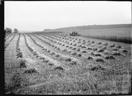 Harvesting corn with tractor, c.1920s