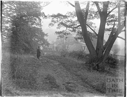 Woodland walk, Bathampton c.1920s