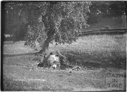 Tree and spring at The Dell, Widcombe, c.1921
