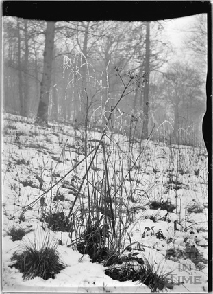 Grass Study in Hampton Woods in the snow c.1930s
