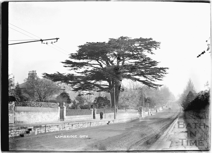 Cedar Tree at Lambridge, London Road c.1920s