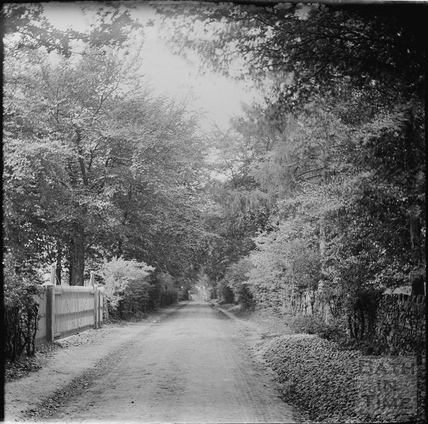 Tree lined road, The Avenue, Claverton Hill, c.1890s