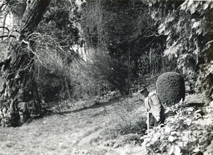Sidney Godwin, Head Gardener of St Catherines Court, in the garden Dec 1967
