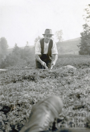 Frank Godwin, Head Gardener at St Catherine's Court, trimming the yew hedge c.1940s