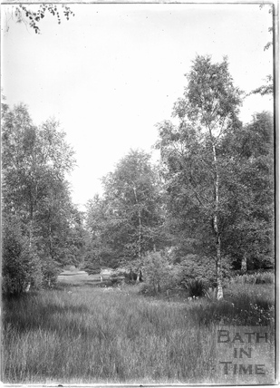 Trees in the Longleat Estate c.1930s