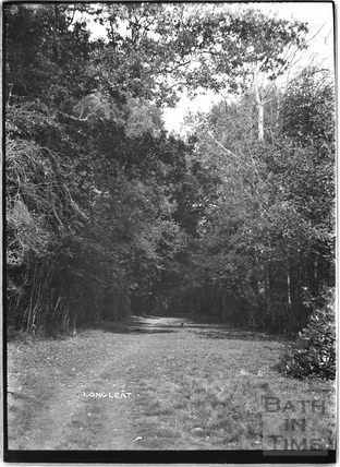Trees and woodland track in the Longleat Estate c.1930s