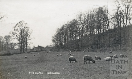 Sheep grazing on the Cliffs, Batheaston, posted 1917