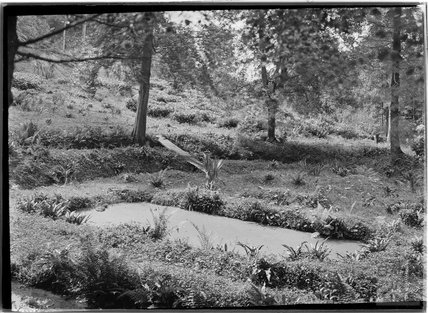 Unidentified woodland scene, c.1930s