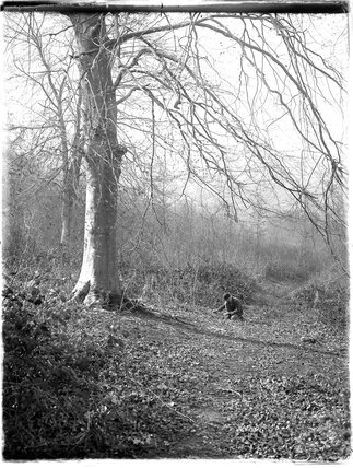 Unidentified woodland path, possibly in Hampshire, c.1920s