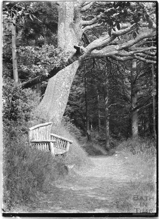 Rustic bench, Selworthy Woods, near Minehead, Somerset, 1912