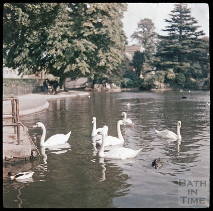 Swans at the Bishop's Palace, Wells, c.1937