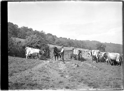 A farmer, his bull and some cows, c.1930s