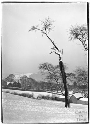 A study of a tree in the snow, thought to be Widcombe Bath, c.1900s