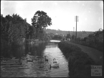 Swans on the Kennet and Avon Canal, Bath c.1920