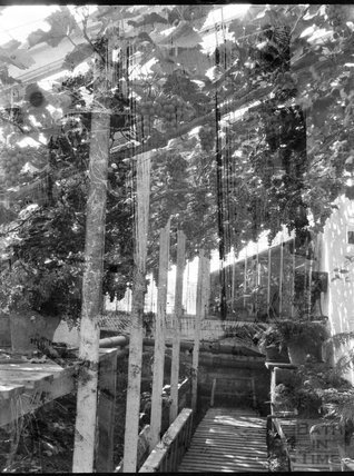Grapes inside a greenhouse, c.1900s