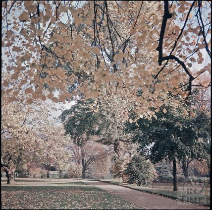 Royal Victoria Park, Bath, Autumn, 1937?