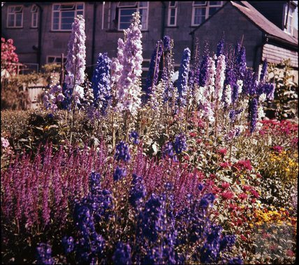 Border in the garden of the photographer in Shakespeare Avenue, Bath, 1955