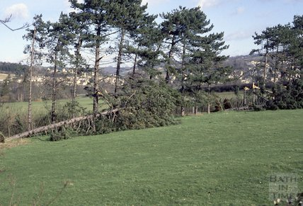 Tree damage in Bathampton, 1990