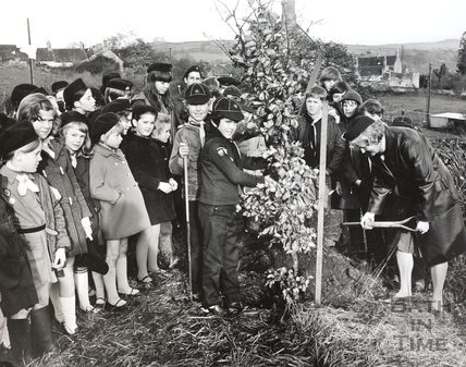 Cubs planting a beech tree to commemorate the European Conservation Year, Bath 1970