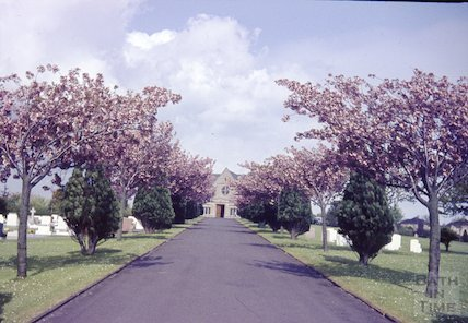 The blossom tree lined avenue at Haycombe Cemetery, c.1960s