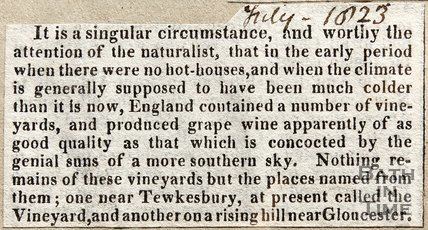 Newspaper article concerning vineyards in Britain, 1823